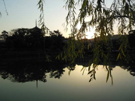 The Sarusawa Pond (Photo: Terao Kaionin)