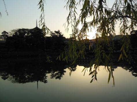 The Sarusawa Pond (Photo: Terao Kaionin)